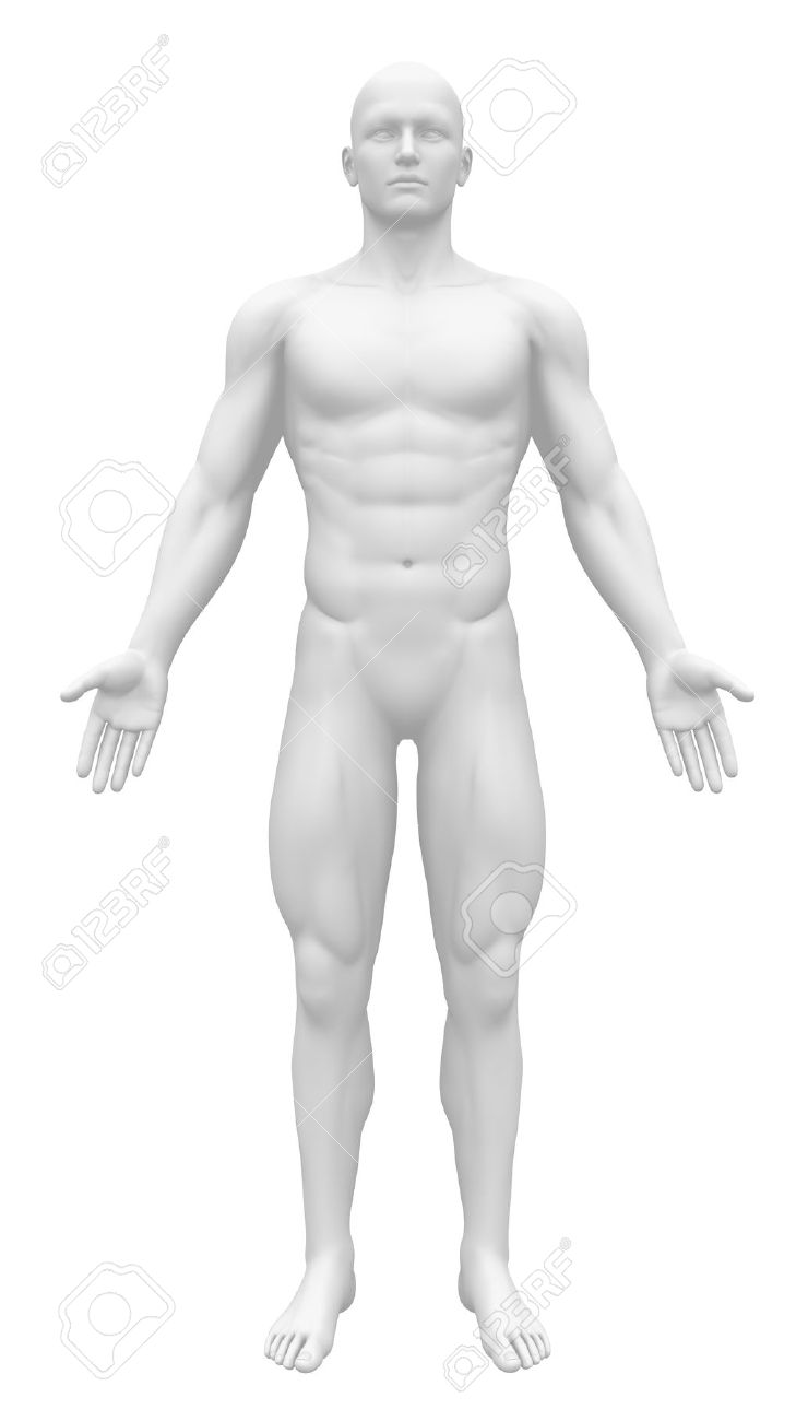 19244704 Blank Anatomy Figure Front View Stock Photo Anatomy Human